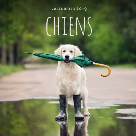 Calendrier 2019 Chiens