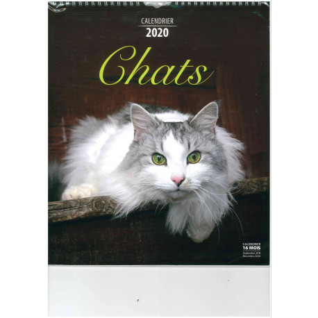 Calendrier Chat 2020.Calendrier 2020 Chats