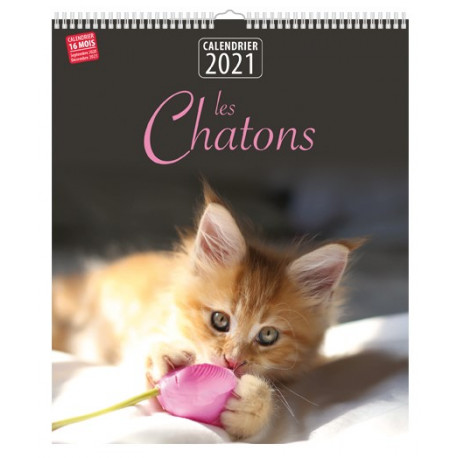 Calendrier 2021 - Les chatons
