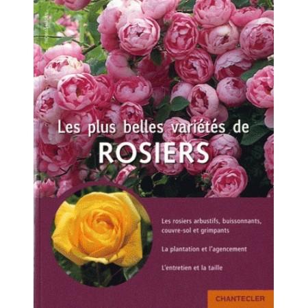 Les plus belles variétés de rosiers